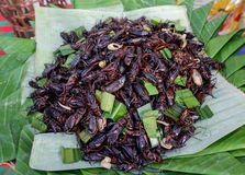 Fried crickets Royalty Free Stock Image