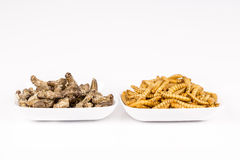 Fried crickets molitors locusts insects Stock Photos