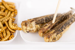Fried crickets molitors locusts insects Stock Photo