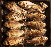 Fried crucian on a baking tray Stock Photography