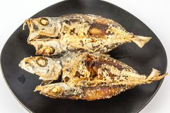 Fried Dried Mackerel. On a black dish Stock Photography