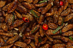 Fried edible insects background. Fried edible spicy larvae background Stock Photo