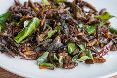 Fried Edible Insects Mix On White Plate Royalty Free Stock Images