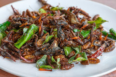 Fried edible insects mix on white plate. With green lime leaves.  Fried insects are regional delicacies food in Thailand Royalty Free Stock Photography