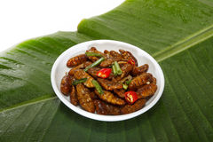 Fried edible insects on white plate and green leaf Royalty Free Stock Photo