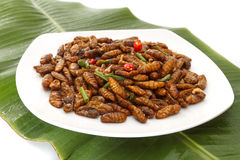 Fried edible insects on white plate and green leaf. Fried edible larvae on white plate and green leaf Royalty Free Stock Image