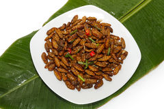 Fried edible insects on white plate and green leaf. Fried edible larvae on white plate and green leaf Stock Photography
