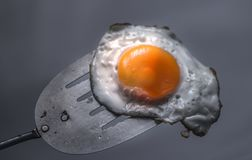Free Fried Egg And Spatula Stock Photo - 116429400