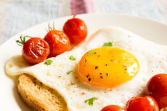 Fried egg on bread and tomatoes Stock Images
