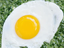 Fried egg with creamed spinach closeup Stock Photos
