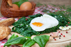 Fried egg on spinach Royalty Free Stock Photos