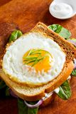 Fried egg on a toast stock photo