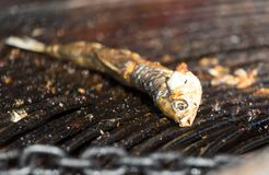 Fried fish on the barbecue. In the park in nature royalty free stock image
