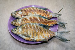 Fried fish close-up on a plate Stock Image