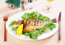 Fried fish Dorada Stock Photography