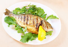 Fried fish Dorada Stock Images