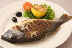 Fried fish dorado Stock Images