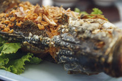 Fried fish with garlic and pepper. Thai food Royalty Free Stock Image