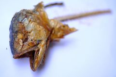 Fish head fry after eating left stock photography