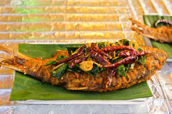 Fried fish with herbs. Royalty Free Stock Image
