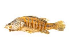 Fried fish isolated stock photo