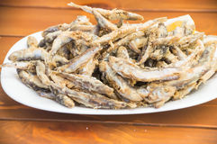 Fried fish(sprat) Stock Images