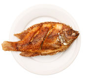 Fried fish in white plate Stock Photos