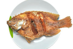 Fried fish On The White Plate Royalty Free Stock Images