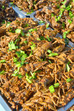 Fried giant water bug. Creative food royalty free stock photography