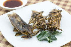 Fried giant water bug on dish. For food background royalty free stock photography
