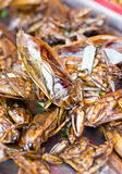 Fried Giant Water Bugs. Royalty Free Stock Photos