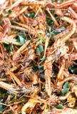 Fried Grasshopper. fotografie stock