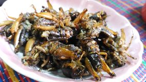 Insects fried in a plate stock images