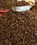 Fried grasshoppers. For sale in a Mexican market Stock Image