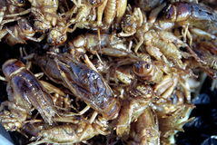 Fried grasshoppers. Street food of Cambodia Stock Photo