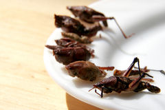 Fried grasshoppers. Traditional mexican snack fried grasshoippers lay on white plate Royalty Free Stock Photos
