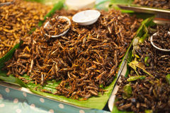 Fried grasshoppers Royalty Free Stock Image