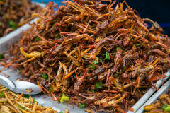 Fried grasshoppers Royalty Free Stock Images