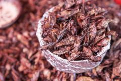 Fried Grasshoppers Chapulines a Oaxaca, Messico fotografie stock