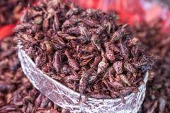Fried Grasshoppers Chapulines a Oaxaca, Messico fotografia stock