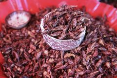 Fried Grasshoppers Chapulines a Oaxaca, Messico immagine stock