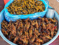 Fried grasshoppers Royalty Free Stock Photography