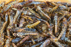 Fried grasshoppers or locusts stock photos