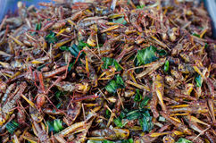 Fried grasshoppers Stock Photos