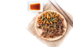 Fried grasshoppers and Silkworm pupa. Isolated on white background on top view with copy space, local food in Thailand Royalty Free Stock Photography