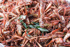 Fried grasshoppers Stock Photography