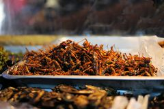 Fried grasshoppers at a Thai market Stock Image