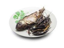 Fried gravade fisken, karpfisk och torkade på chili med koriander Royaltyfria Bilder
