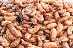 Fried grub larvae. Grub larvae fried, ready to eat stock photos
