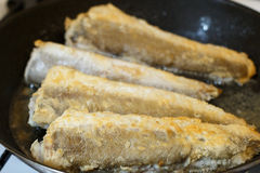 Fried hake fish fillet in a frying pan Stock Photography
